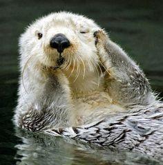 otter thinking