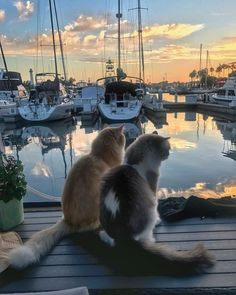 Beautiful friendship - your daily dose of funny cats - cute kittens - pet memes - pets in clothes - kitty breeds - sweet animal pictures - perfect photos for cat moms Source by memes Cute Kittens, Cats And Kittens, Kitty Cats, Animals And Pets, Baby Animals, Funny Animals, Cute Animals, I Love Cats, Crazy Cats