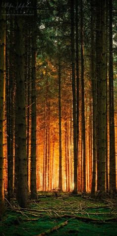 20 Amazing Pictures of Nature's Creativity - Trees http://www.incredible-pictures.com/
