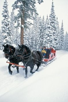 A horse-drawn sleigh at Durango, CO.