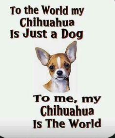 Raza Chihuahua, Chihuahua Quotes, Teacup Chihuahua, Chihuahua Puppies, Dog Quotes, Dogs And Puppies, Doggies, Funny Pet Quotes, Funny Chihuahua