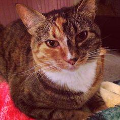 Mia Cat | Pawshake Surrey