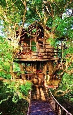 Reminds me of the Swiss family Robinson house!!