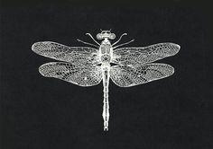 dibujo libélula, libélula, print libélula, dibujo mariposa, dibujo blanco y negro, dibujo animal, dibujo vintage, dibujo insecto, lámina A4