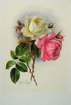 Paul de Longpre ~ light yellow and pink roses