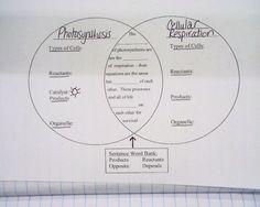 Printables Cellular Respiration Diagram Worksheet cellular respiration diagram worksheet blank imagestack biology stuff pinterest metabolism workshop and worksheets