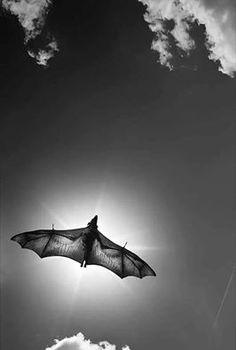 La magnificencia del astro solar, eclipsada por el vuelo de un murciélago.