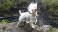 Have you seen Jeff? £1000 reward offered for missing terrier http://shr.gs/gS3jTRF