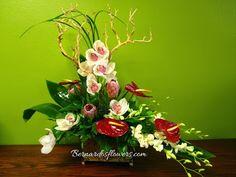Bernardo's Flowers: BF-H27