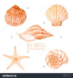 Vector Watercolor Sea Shells. Hand Paint Starfish, Scallop, Shell, Conch, Mollusk. Summer Holidays Design Elements. - 264921437 : Shutterstock