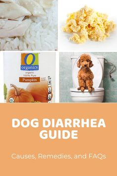 Dog Vomiting Causes, Color Meanings, and Remedies - Doodle Doods Dog Upset Stomach Remedies, Dog Diarrhea Remedy, Vomiting Remedies, Dog Has Diarrhea, Diarrhea Causes, Bland Diet For Dogs, Dog Throwing Up, Dog Health Care, Dog Diet