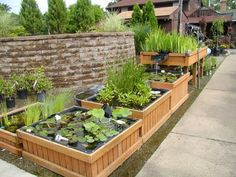 DIY mini garden pond in bucket square containers garden water features Aquaponics System, Aquaponics Fish, Hydroponics, Backyard Aquaponics, Pond Plants, Water Plants, Growing Plants, Planting Plants, Garden Care