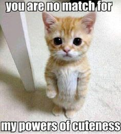 40 Best Funny Animal Quotes Images Cut Animals Cutest Animals