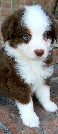 Beautiful little puppy!