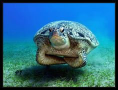 Awesome Ocean Turtle Photos