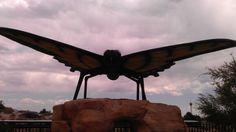 Butterflyus Gigantus #SpringsPreserve