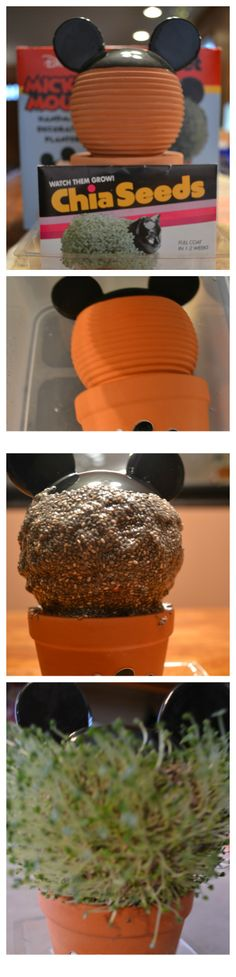 Newest addition to the Chia Pet Family is Disney Mickey Mouse Chia Pet. Mickey Mouse Ears, Disney Mickey Mouse, Chia Pet, Clay, Kids, Food, Clays, Young Children, Boys