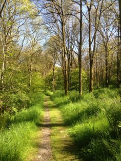 Cally Woods near Gatehouse of Fleet in Dumfries and Galloway. June 2015. B.