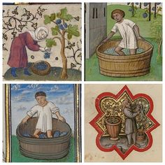 Treading grapes for wineproduction was an activity often associated with the month of September. . A Woman Harvesting Grapes (detail), about 1410, French. Tempera colors, gold leaf, gold paint, and ink on parchment. . A Man Treading Grapes (detail), early 1460s, Flemish. Tempera colors, gold leaf, and ink on parchment. . A Man Harvesting Grapes (detail), between 1389 and 1404, Italian. Tempera colors, gold leaf, gold paint, and ink on parchment. . A Man Treading Grapes (detail), about 145...