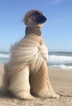 Cute Kittens, Afghan Hound, Dog Rates, Funny Pigs, Fluffy Dogs, Fotos Do Instagram, Destination Voyage, Funny Dog Videos, Cute Dogs And Puppies