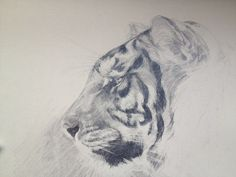 Tiger drawing by Tony O'Connor whitetreestudio.ie