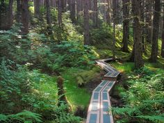 Nice trails in Kodiak Island, Alaska. Lots of bears too! North To Alaska, Visit Alaska, Kodiak Alaska, Anchorage Alaska, Oh The Places You'll Go, Places To Travel, Places To Visit, Dream Vacations, Vacation Spots
