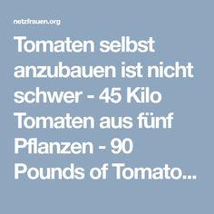 Tomaten selbst anzubauen ist nicht schwer - 45 Kilo Tomaten aus fünf Pflanzen - 90 Pounds of Tomatoes from 5 Plants - netzfrauen