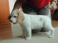 Real life baby Snoopy