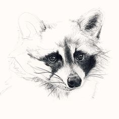Unfinished Portrait 7 Raccoon drawing #raccoon #drawing #drawings #draw #animal #animals ...