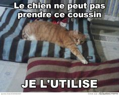 tout comme Roxy et Chestounet Funny Cats, Funny Animals, Animals And Pets, Cat Jokes, Funny Jokes, Funny Cat Pictures, Funny Images, Funny French, I Love Cats