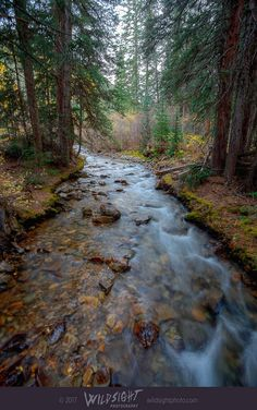 Near Aspen, Colorado, a forest river cuts through majestic pine trees as touches of fall color peak out along the Conundrum Hot Springs Trail. This vertical nature canvas or print will bring a sense of peace and calm to any bedroom, living room, or office. Colorado photography, Colorado landscape, Aspen Colorado, Conundrum Creek, River photo, vertical canvas art