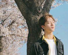 !!BACA DULU!!  🚫WARNING!!! BOYXBOY!!! YAOI!!!  TOLONG JANGAN SALAH L… #ceritapendek # Cerita pendek # amreading # books # wattpad Park Ji-sung, Nct 127, Park Jisung Nct, Dream Pictures, K Wallpaper, Fandom, Na Jaemin, Jeno Nct, Entertainment