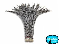 """10 Pieces Lady Amherst CENTER Pheasant Feathers 30-40/"""" Zebra-Look Halloween//Hat"""