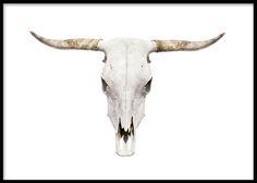 Plakat med bøffelhorn, kranie