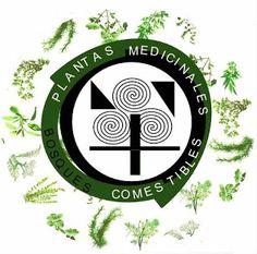INDICE PLANTAS MEDICINALES