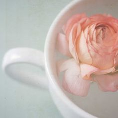 Dreamy pastel flower photography . coffee cup print . cottage kitchen art . shabby chic decor . 5x5 . Let it all Float Away