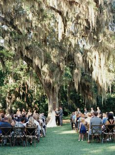 wedding under gorgeous Spanish moss | Cassidy Carson