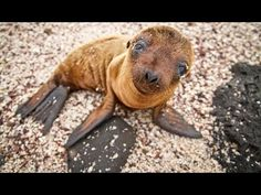 """▶ SHOCKING Photos! """"Pacific Ocean Now Dead From Fukushima Radiation"""" - YouTube"""