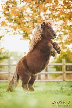 Cutest little chubby pony rearing up. Look at that belly!