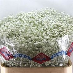 Gypsophila Hora is a medium head white variety and extremely popular in wedding flowers. Hora gypsophila is available in different stem lengths - the taller the stem length, the heavier the bunch
