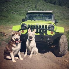 Jeeps go well with German Shepherds and Huskies.