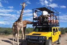 VIP Behind the Scenes Tour - Out of Africa - Camp Verde, AZ