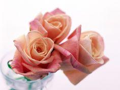 Три прекрасные розы