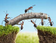Ants Work Together