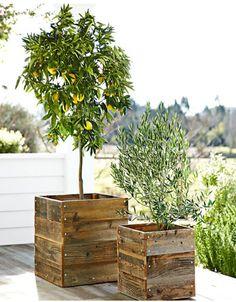 Timber pots