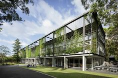 OLMC Parramatta Janet Woods Building using stainless steel mesh to provide structure for Green Facade - 2014 NSW Architecture Awards shortlist | ArchitectureAU. See http://www.ronstantensilearch.com/project-gallery/all-projects/landscape-greening/ for other inspiring greening projects from Ronstan Tensile Architecture