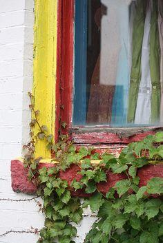 shop window, Harvard Square