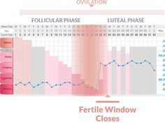 when you're fertile window closes - Your egg only lies for up to 24 hours, so by the time you see your temperature rise, your fertile window has closed.