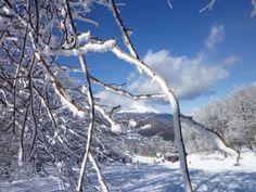 「Inverno・Neve」 Karuizawa