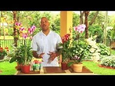 ORCHID CARE: Learn how to make an orchid flower again and rebloom after the last phalaenopsis orchids flower falls from its stem! Care for your orchids after. Phalaenopsis Orchid Care, Moth Orchid, Orchid Plants, Air Plants, Garden Plants, Indoor Plants, Exotic Flowers, Beautiful Flowers, Easy House Plants
